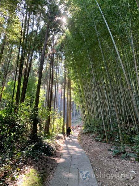 高々と立ち並ぶ竹の間を抜ける