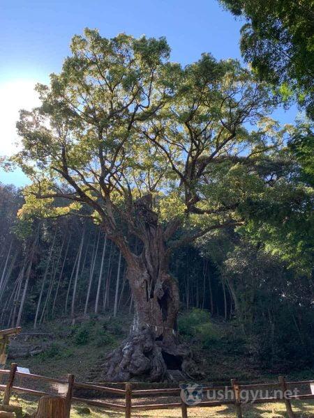 武雄の大楠はわざわざ訪れる価値のあるスポット