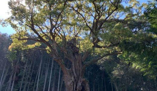 近代的で美しいデザインの「武雄市図書館」と、自然の力にあふれた樹齢3,000年以上の「武雄の大楠」