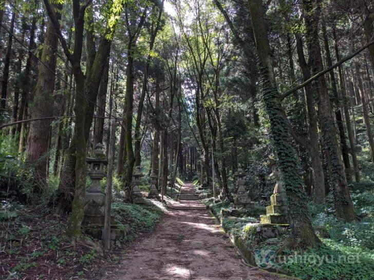 天気が良い日でも、樹木に遮られてかなり薄暗い道のり