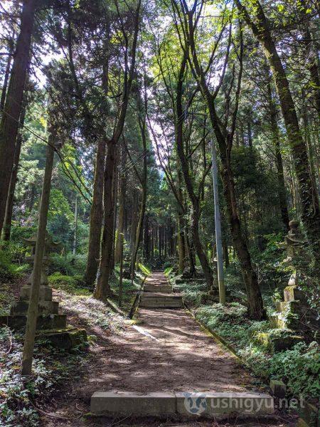 周囲の木々はいずれも背が高く、葉っぱは上の方にのみ生い茂っているものばかり