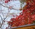 福岡・太宰府の紅葉の写真を撮ってきた!(竈門神社・光明禅寺など)