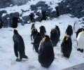 ペンギンやシロクマ、アザラシなど魅力いっぱいの北海道・旭山動物園に行ってきた!